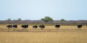 03c-300x150 Volontärtour in den Banhine Nationalpark